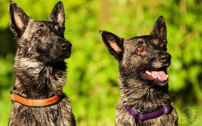 Dobře vychovaní psi… ati druzí