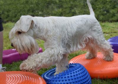 Lekce: Dog fitness aneb kondiční posilovna pro psy