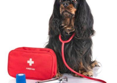 Kurz: První pomoc pro psa