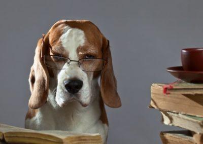 Kurz: Starého psa novým kouskům naučíš