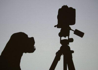 Videotéka (nejen) pro reaktivce zdarma